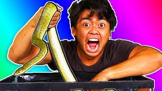 Whats In The Box Challenge UNDERWATER CREATURES Snakes Fish Turtles