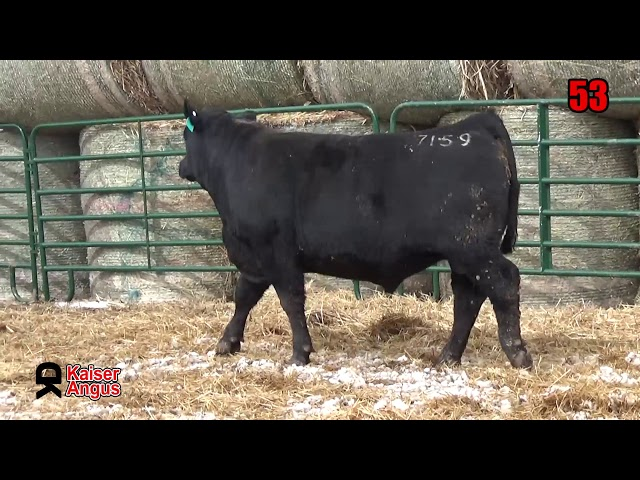 Kaiser Angus Ranch Lot 53