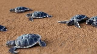 Этот день в истории: 23 мая — Всемирный день черепахи