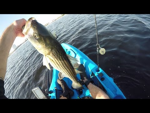 Kayak Spring Stripers on Bunker and Large Swimbaits
