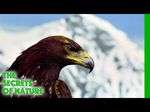 Tough at the Top - The Secrets of Nature