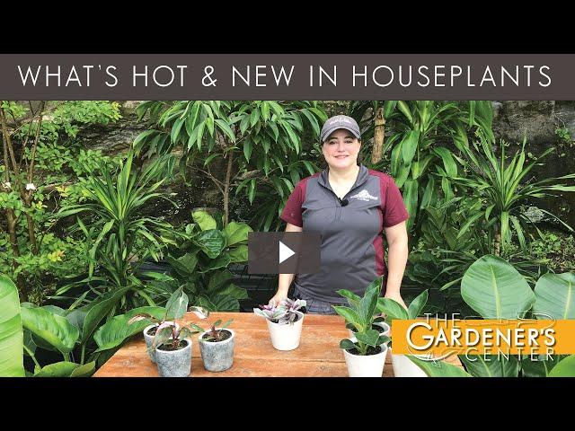 8/7/2020 Houseplant Tips with Joy
