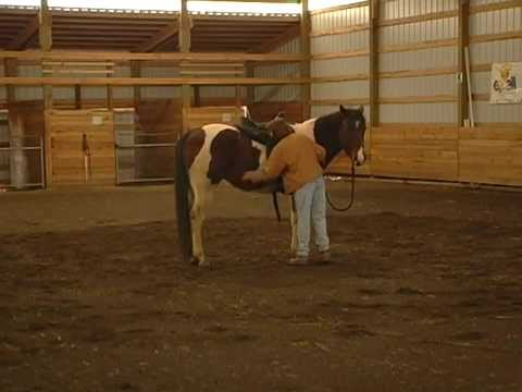 Introduction of the Saddle - Starting a Horse Under Saddle with Chief Ep. 6