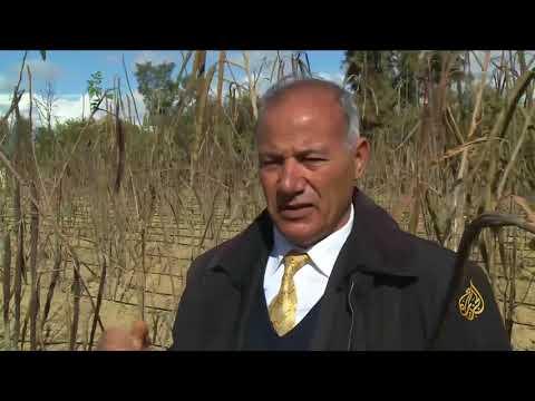 تونس تبدأ زراعة المورينغا للحصول على فوائدها الصحية  - نشر قبل 10 دقيقة