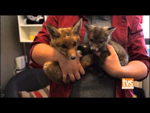 Camilla meets Sydney Fox Rescue on Creature Corner