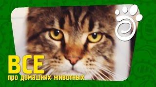 Кошка И Выставка: О Чем Надо Знать. Все О Домашних Животных