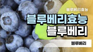 많은 연구에서 블루베리와 같은 식물성 식품으 섭취를 늘…
