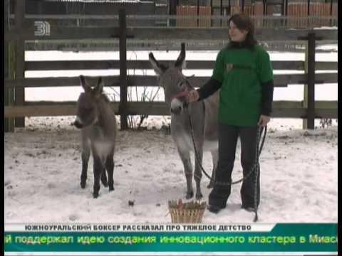 В Челябинском зоопарке ослы нарисовали картину