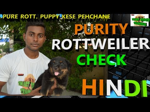 How to Check Purity of Rottweiler Puppy In Hindi   Pure Rottweiler Breed   dog training in hindi