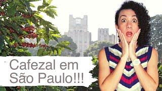 Cafezal em São Paulo!!! - Pílulas Paulistanas