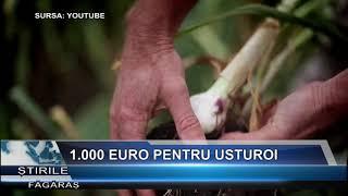 1.000 euro pentru usturoi