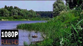 Река, лето, природа, камыш, летний ветерок, звуки природы, птицы поют. Релакс. Медитация.