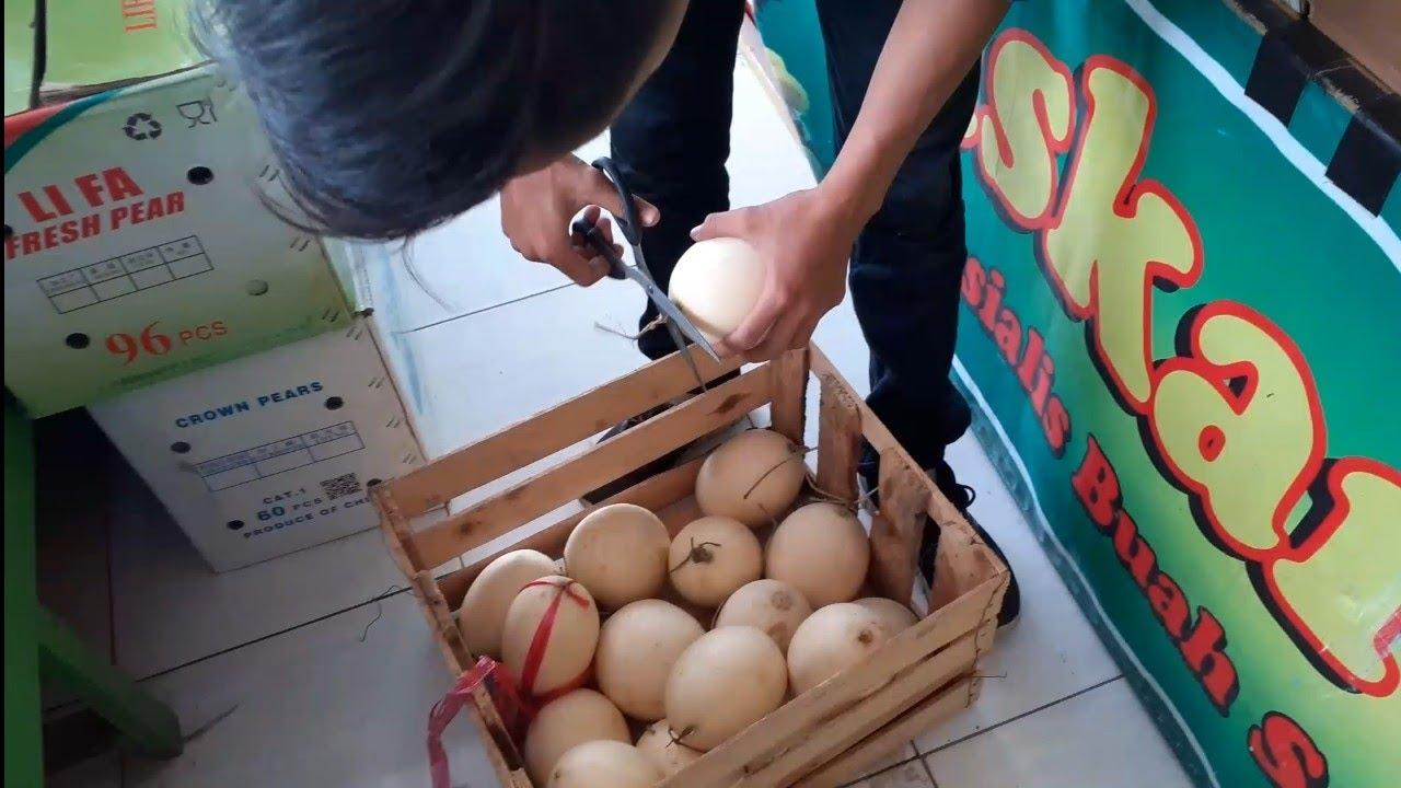 Si Pendatang baru, Melon kirani