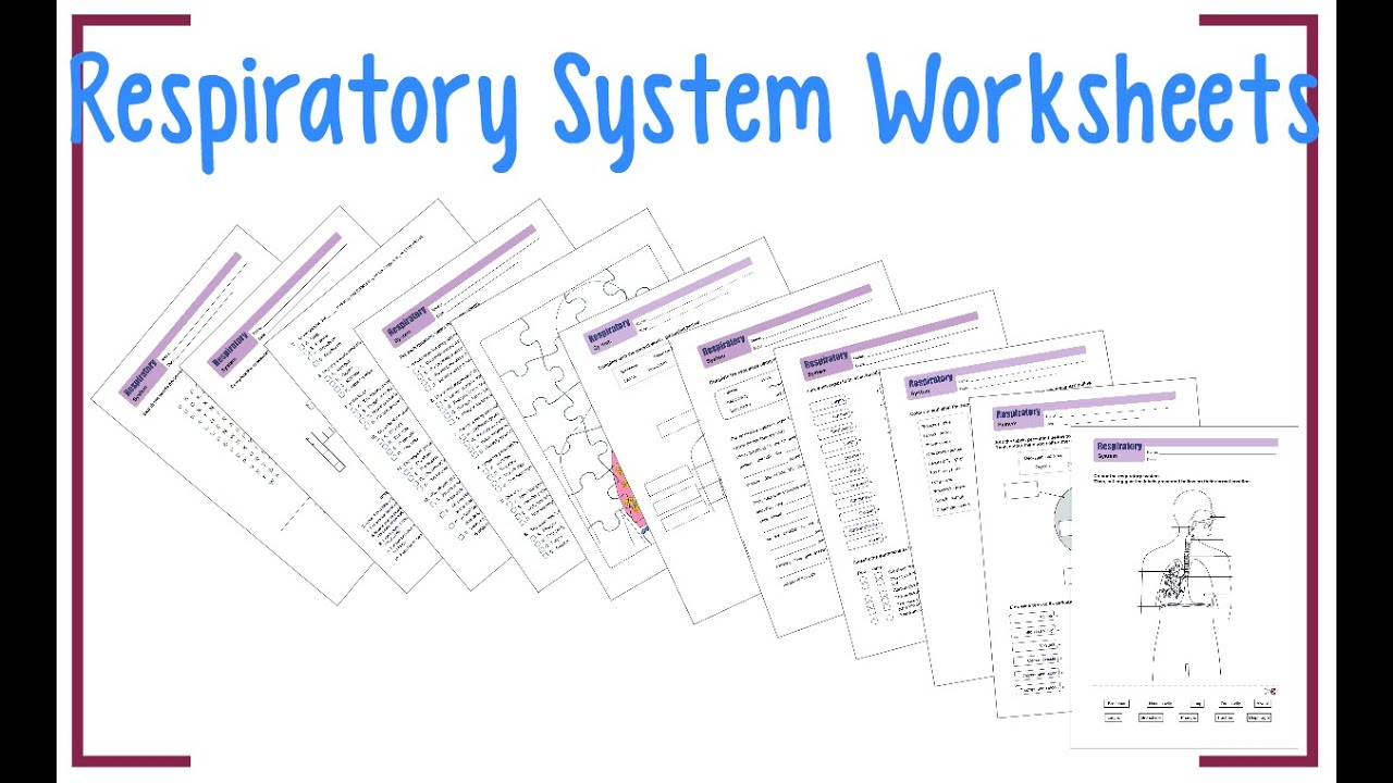 Respiratory System Worksheets - YouTube