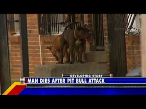 Man Dies After Pit Bull Attack