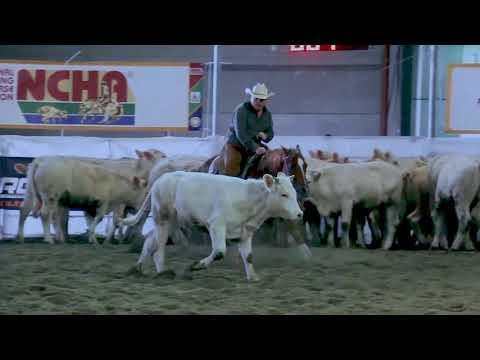 NCHA Cutting Horses Italy