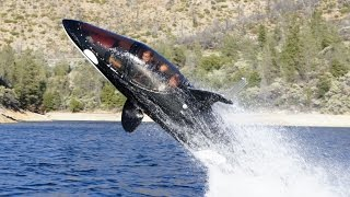 10 Coolest Billionaire Water Toys