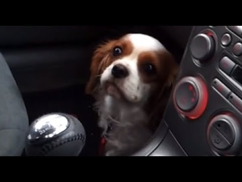 Dog's priceless 'puppy face' reaction after realizing she's at vet
