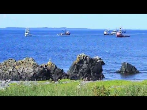 Alaskan Adventure pt 2: Seward  Highway , Kenniccot Ferry and Kodiak Island