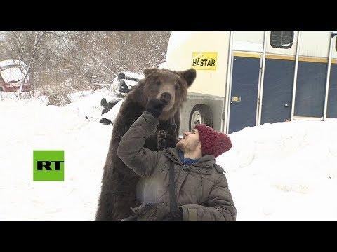 Vea como un oso empuja la silla de ruedas de su entrenador, que sufrió un grave accidente (Info + Video)