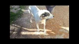 Shambles the Talking Dog