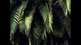 Фото слайд-шоу Природа. Пальмы. Часть 2.