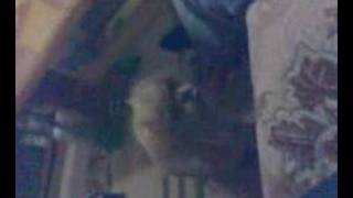 Download Video Animal Sex MP3 3GP MP4