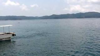 奄美大島の瀬戸内町・古仁屋と加計呂麻島の間の大島海峡で毎年開催され...