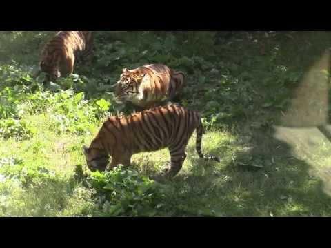 Safari Bioparc Zoo de Doué la Fontaine サファリ動物園