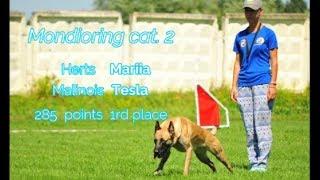 "MR2 ""Mafia"". Herts Mariia Mondioring cat. 2 Malinois Tesla 285 points 1rd place"