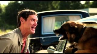 Отрывок из фильма Тупой и еще Тупее 2, сцена Лойд с собакой