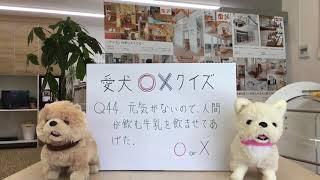 愛犬家住宅ならセラフ榎本◯ホームページはこちらhttp://www.qp-dog.jp ...