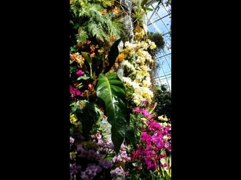 Orchid Mountain at NYBG Orchidelirium