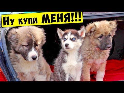 РЫНОК ЖИВОТНЫХ / Собачий рынок Одесса / Продажа собак и кошек / Птичий рынок Цены
