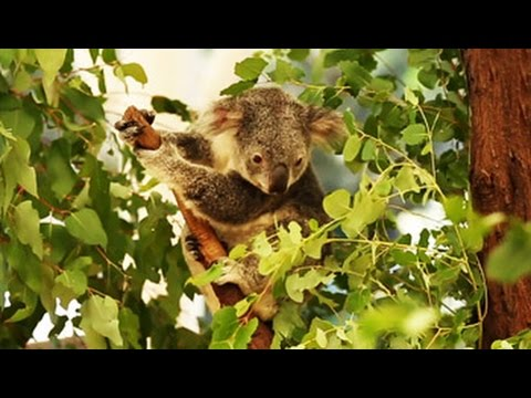 #GLAadventure's day out at Lone Pine Koala Sanctuary