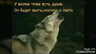 Очень грустный клип про волка.(ч.о)