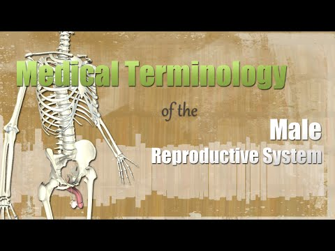 Medical Terminology of the Male Reproductive System