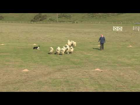 Aled Owen with Llangwm Glesni 2018 North Wales Sheep Dog Society Singles Championship Double Gather Mp3