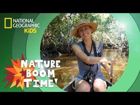 Florida Everglades | NATURE BOOM TIME