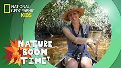 Florida Everglades   NATURE BOOM TIME