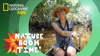 Florida Everglades | NATURE BOOM TIME