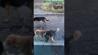 Жителей Микуня терроризирует стая бродячих собак