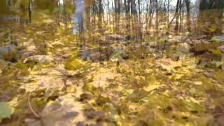 """Видео. Осень в парке """"Сокольники"""" (октябрь, 2015)"""
