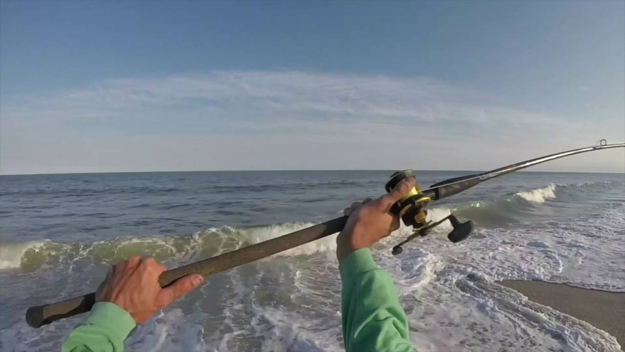 Cape may surf fishing striped bass whale and sand sharks for Surf fishing for stripers