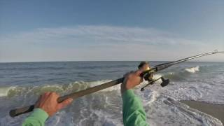 Cape May Surf Fishing: Striped Bass, Whale and Sand Sharks