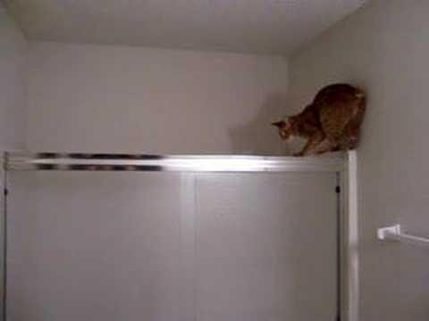 Super Cat Jumping 2