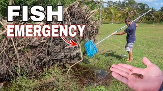 Saving Trapped SHRIMP & FISH in My Backyard....