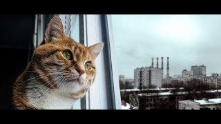 Смешные коты!!! Подборка Funny cats, Прикольные, ржачные, веселые коты,кошки ,котята(CatsLIVE)