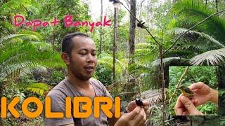 Download Lagu JERAT/JEBAK BURUNG KOLIBRI TerMUDAH  - Pikat  Burung KOLIBRI/KONIN Dengan Mp3 - Nggetah Burung Guys mp3
