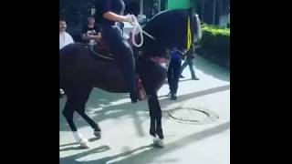 Download Video HORSE DANCE WITH GIRL PUSHKAR MELA AJMER.लड़की के साथ घोड़े नृत्य MP3 3GP MP4